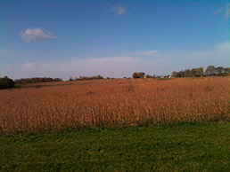 Soybean-field-1-15col.jpg